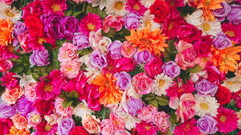 Multi Colors Pink Purple Red Yellow Flowers Background royalty free stock images