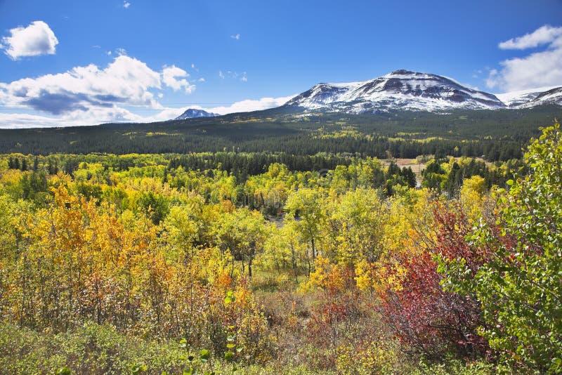 Multi-colour autumn stock image