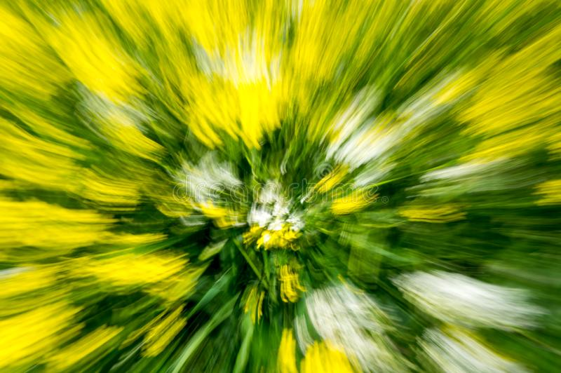 Multi-coloured background. Of blurred field flowers stock images