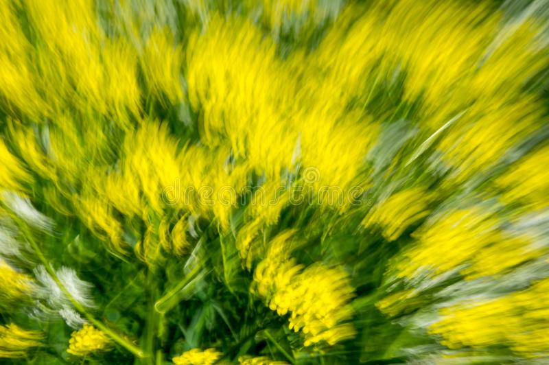 Multi-coloured background. Of blurred field flowers stock photo