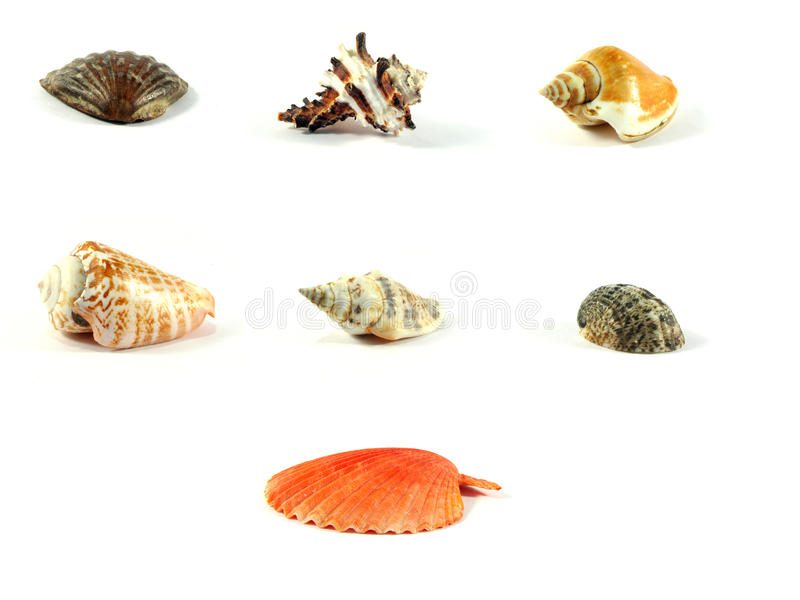 Multi-coloured sea cockleshells. Many color sea cockleshells on a white background stock photo