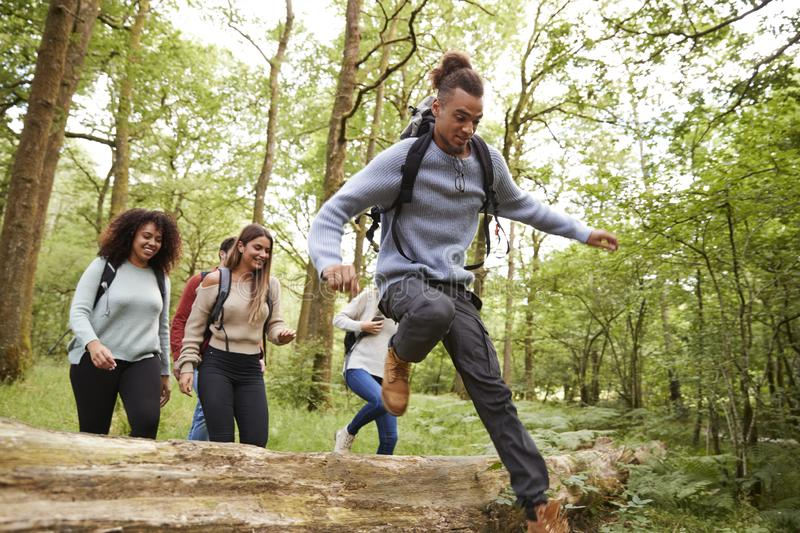 Multi ethnic group of five young adult friends running in a forest and jumping over fallen tree during a hike royalty free stock image
