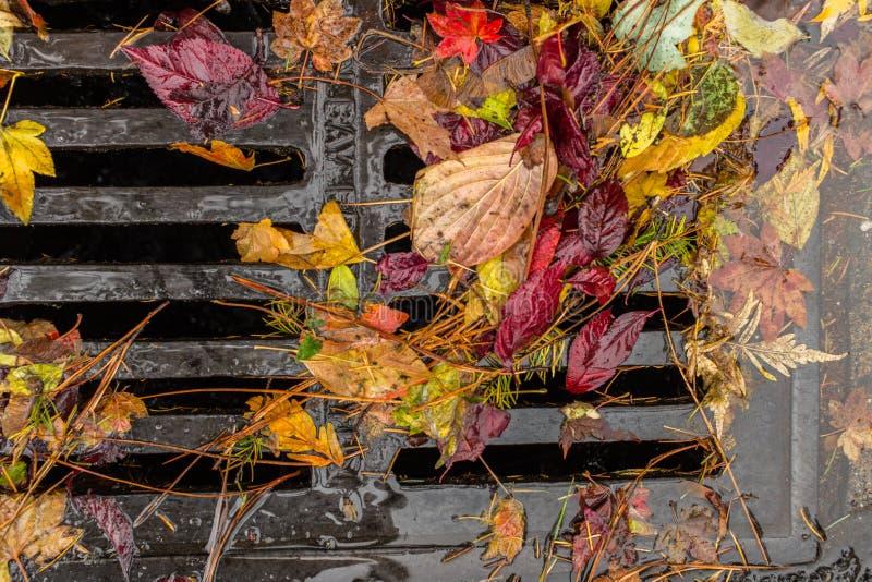 Multi farbige Blätter, die einen Gully verstopfen lizenzfreie stockfotografie