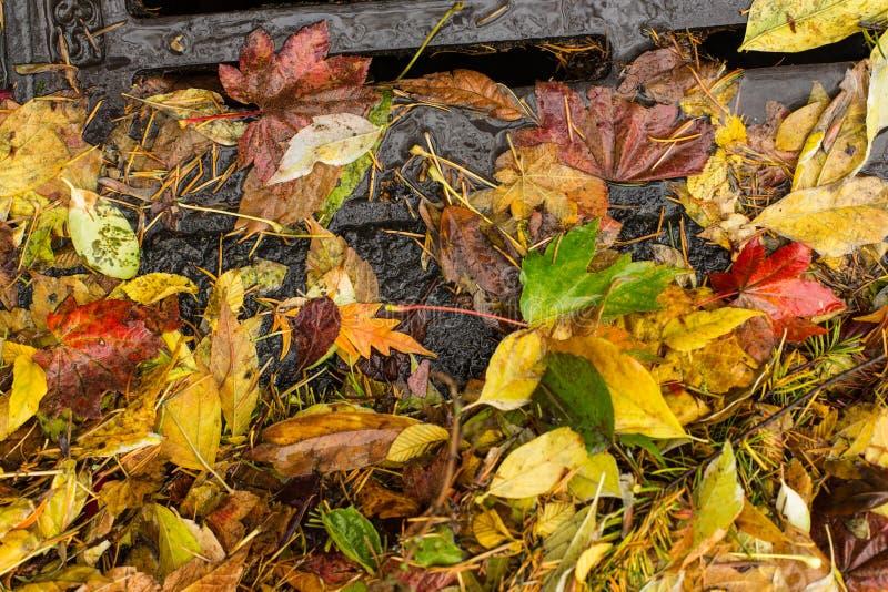 Multi farbige Blätter, die einen Gully verstopfen lizenzfreies stockbild