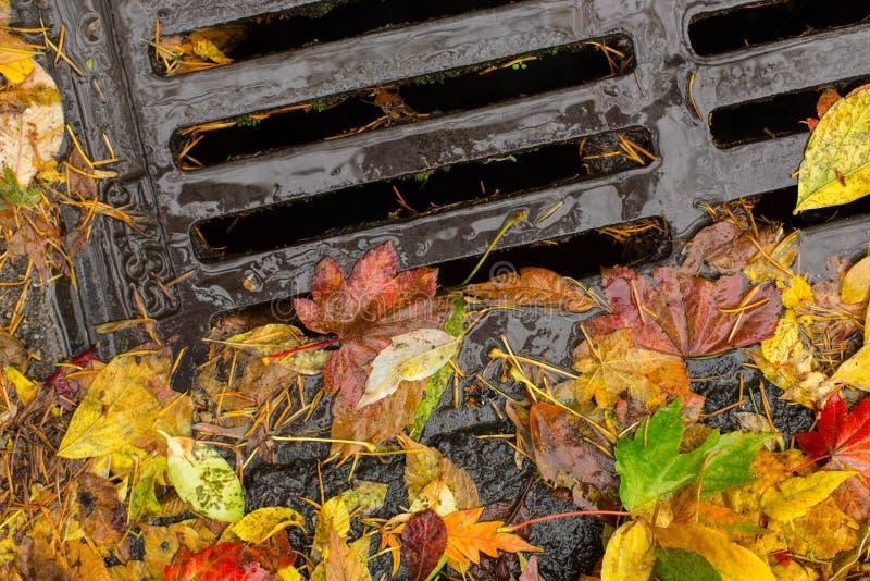 Multi farbige Blätter, die einen Gully verstopfen stockbild