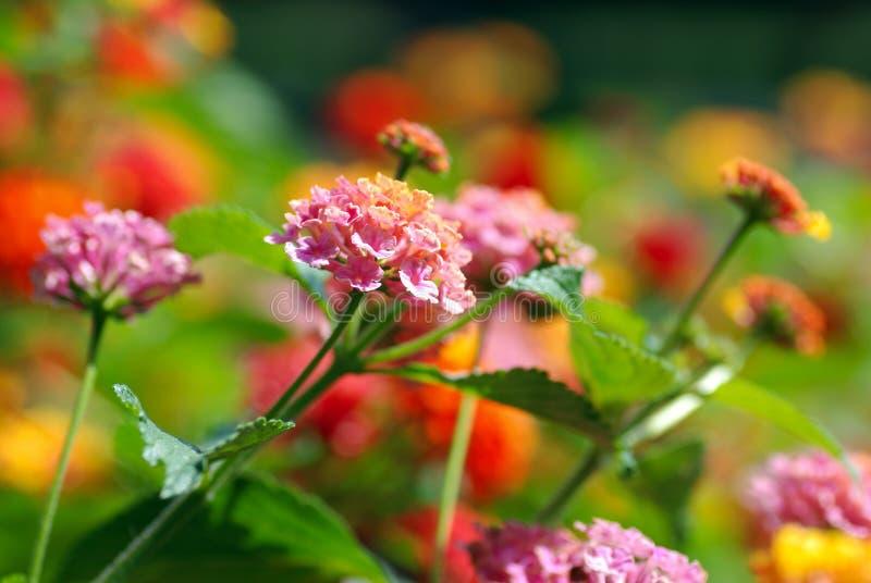 Multi farbige Blumen stockfoto