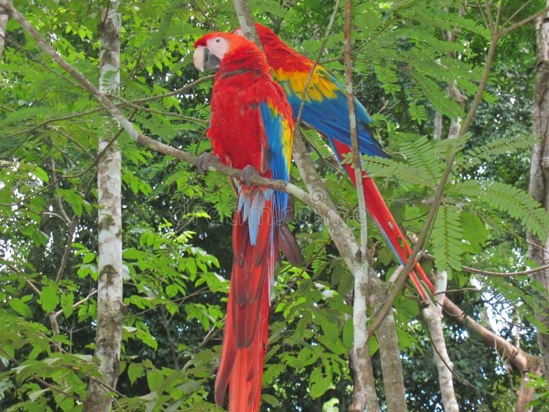 Multi farbiger tropischer Park stockfotografie