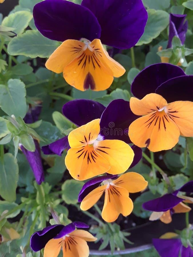 Multi flores da cor foto de stock royalty free