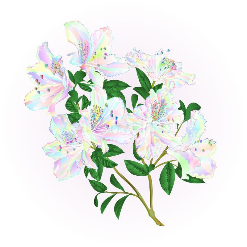 Multi galho colorido do rododendro com tração editável da mão da ilustração do vetor do vintage do arbusto da montanha das flores ilustração do vetor