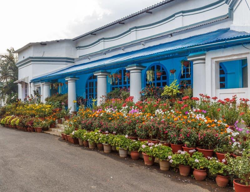 Multi gekleurde bloemen in een tuin voor openbare mening met mensen op de achtergrond, Salem, Yercaud, tamilnadu, India, 29 April stock afbeeldingen