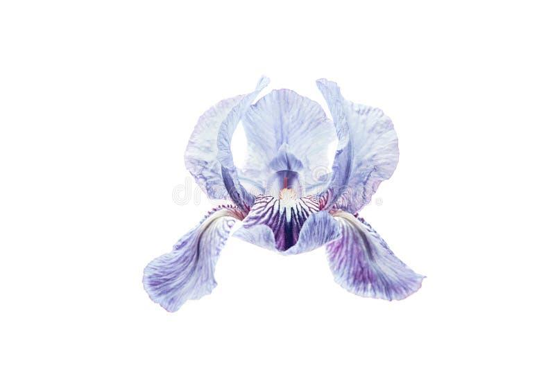 Multi gekleurde bloemknop stock fotografie