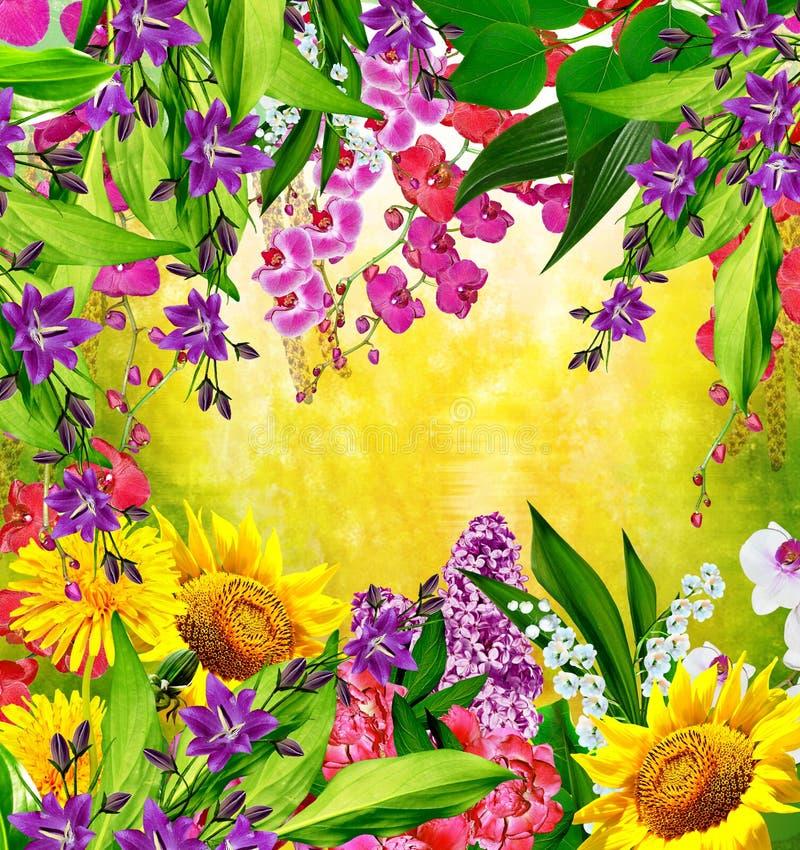 Multi gekleurde mooie bloemen royalty-vrije stock afbeeldingen
