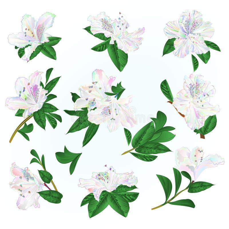 Multi gekleurde van bloemenrododendrons en bladeren bergstruik op een blauwe uitstekende vector editable illustratie als achtergr vector illustratie