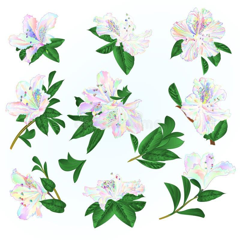 Multi gekleurde van bloemenrododendrons en bladeren bergstruik op een blauwe uitstekende vector editable illustratie als achtergr royalty-vrije illustratie
