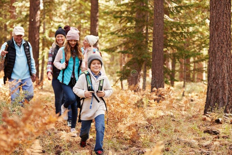 Multi Generationsfamilie, die in einem Wald, Kalifornien, USA wandert lizenzfreie stockfotografie