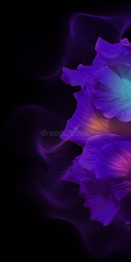 Multi petali colorati del fiore su fondo nero fotografia stock