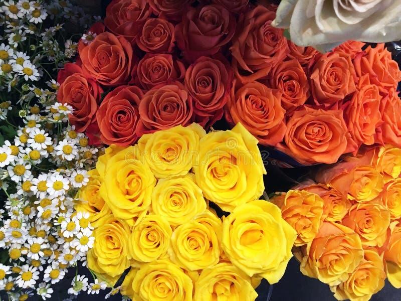 Multi rosas da cor em uma pilha imagem de stock royalty free