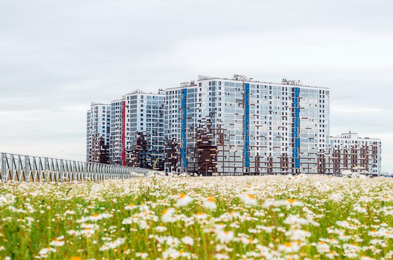 Multi-storey houses chamomile flowers. Russia, Saint-Petersburg July 2017. stock image