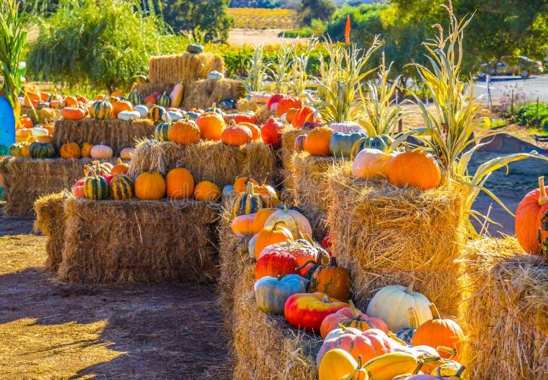 Multi zucca & zucche colorate per Halloween & il ringraziamento immagine stock libera da diritti