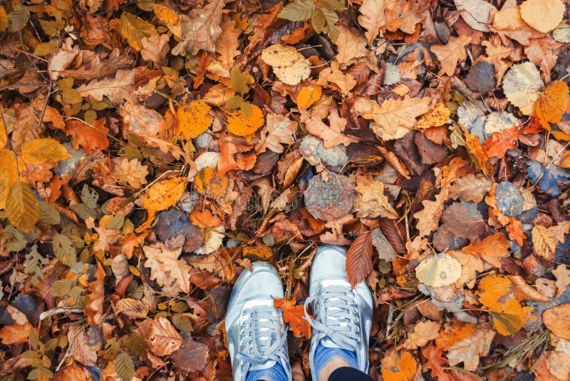 Multicolor листья осени стоковое изображение rf