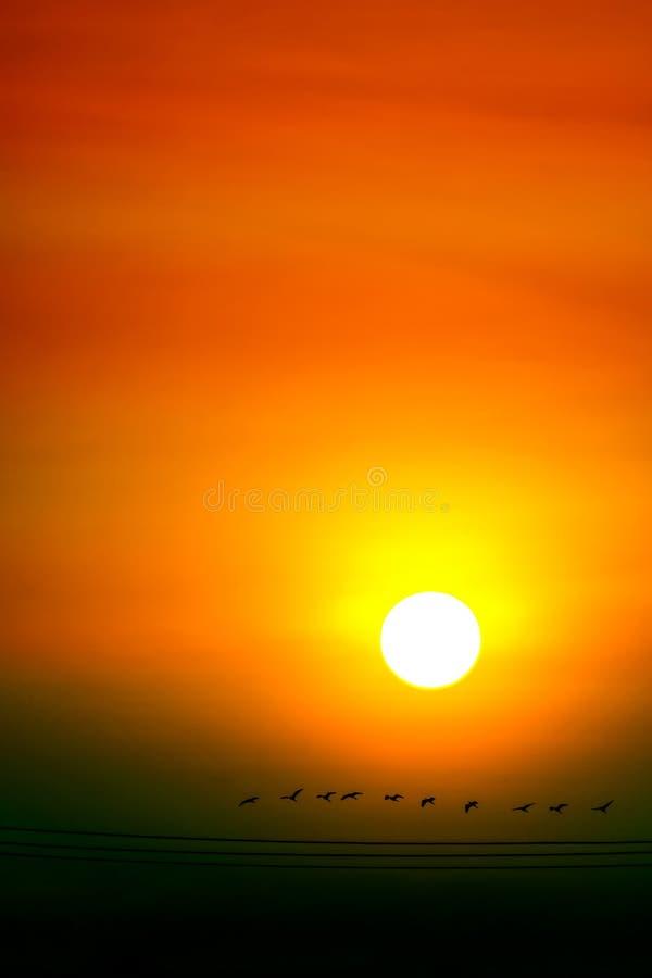 multicolor луча неба и солнца захода солнца совсем вокруг и летящих птиц силуэта стоковое изображение rf