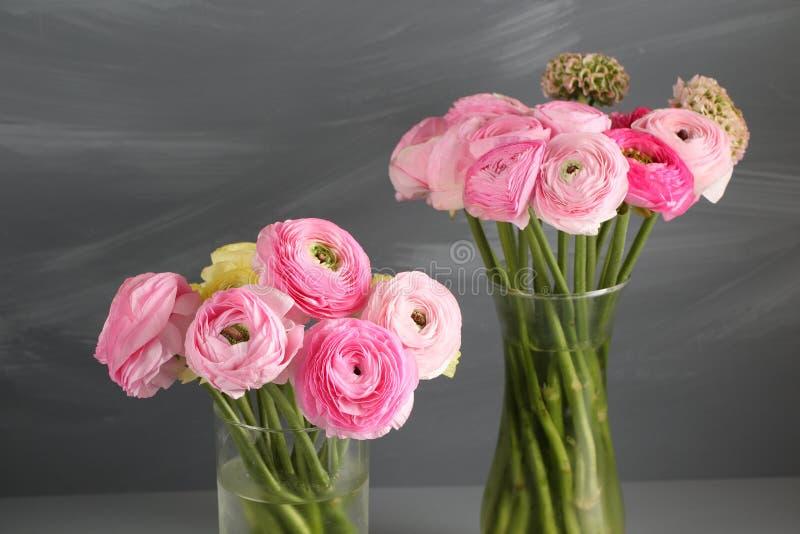 Multicolor розовый лютик, лютик в стеклянной вазе на серой предпосылке стоковые изображения rf