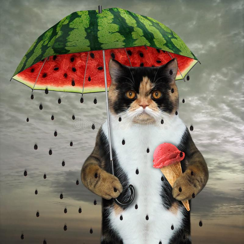Cat under watermelon umbrella royalty free stock image