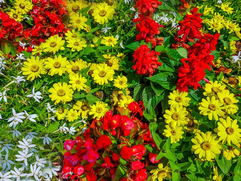 Multicolor flowers background with red and yellow bugs. Multicolor flowers background with red, white and yellow bugs royalty free stock photography