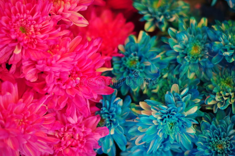 Multicolor flowers #2 stock images