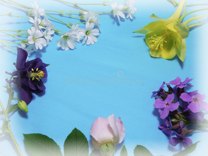 Multicolor flowers at the blue background stock image
