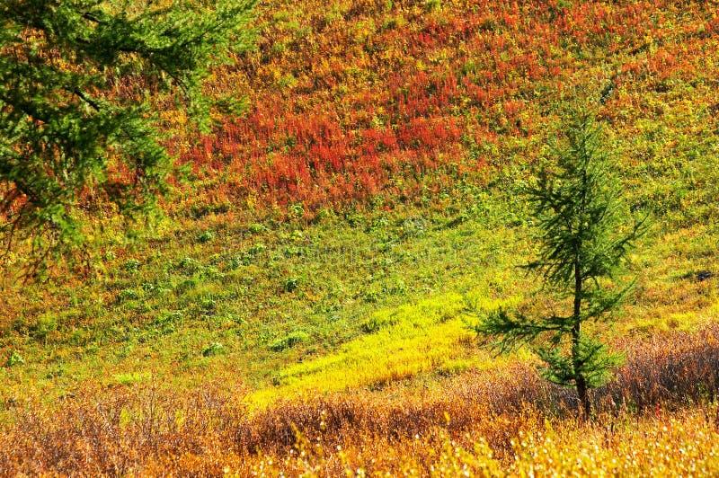 multicolor krajobrazu zdjęcie royalty free