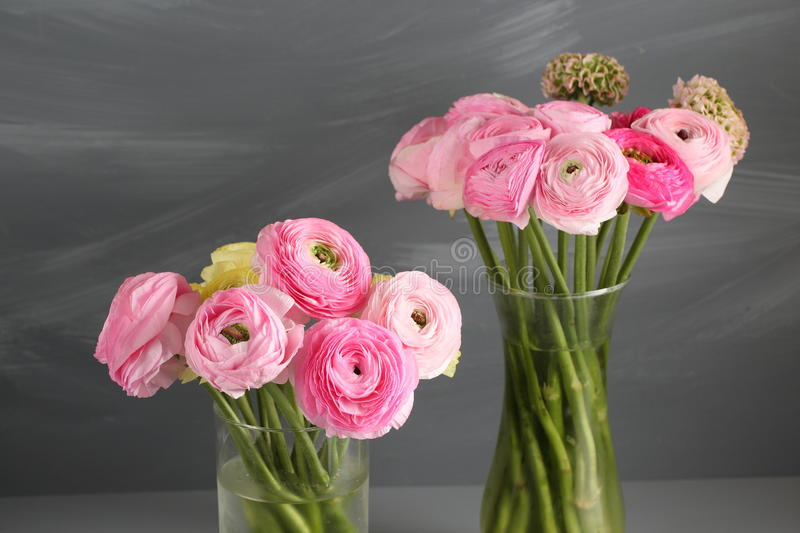 Multicolor pink buttercup, Ranunculus in the glass vase on the gray background. Multicolor buttercup, Ranunculus in the glass vase on the gray background royalty free stock images