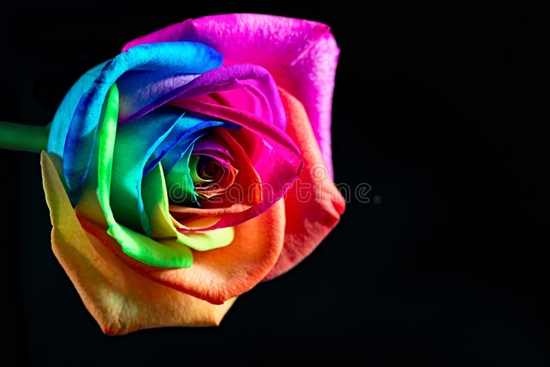Multicolor se levantó foto de archivo libre de regalías