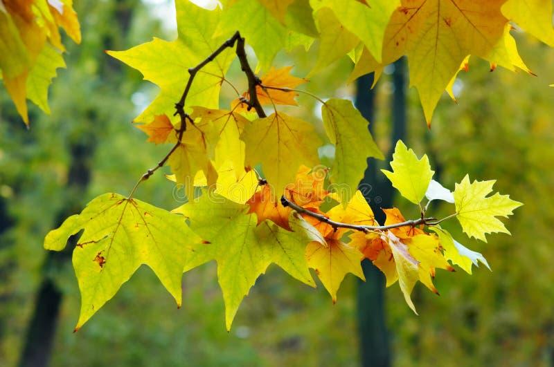 Multicolored autumn royalty free stock photos