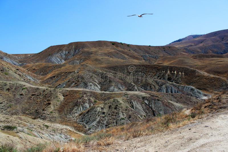 The multicolored backs of the mountains are brown and gray, covered with sparse vegetation. Heat, drought. A lone gull flies in th. The colorful backs of the stock photos