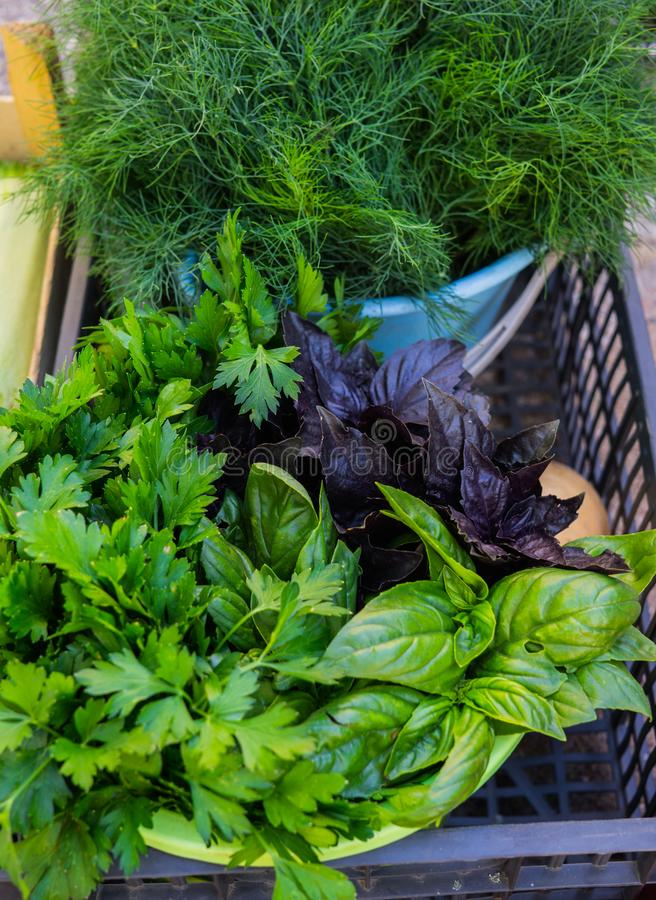 Multicolored basil, parsley and dill in a box at the farmers market stock images