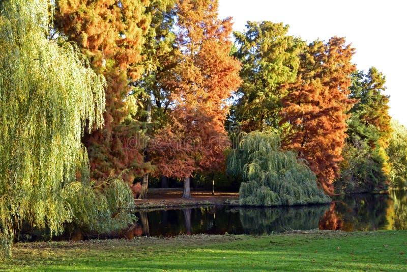 Bright motley autumn stock image