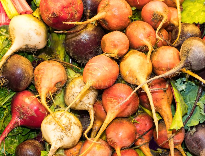 Multicolored beets with roots and leaves in bulk. A pile of multicolored beets with roots and leaves in bulk stock image
