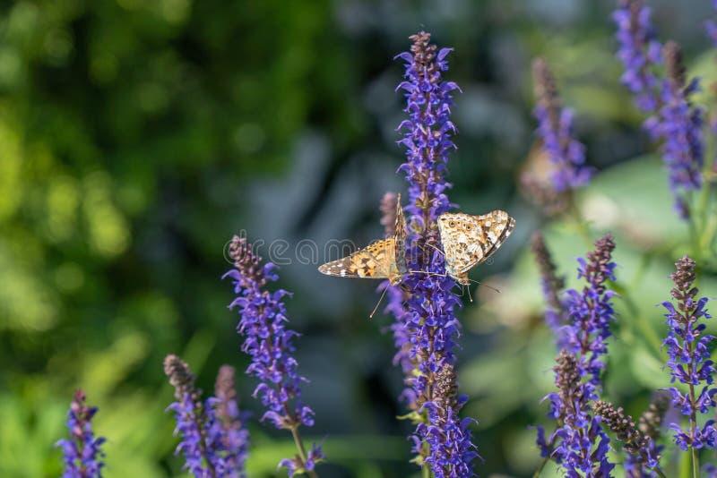 Multicolored bloemen op groene weide in bos Vliegende bijen en vlinders vult de schoonheid en de diversiteit van aard aan stock afbeeldingen
