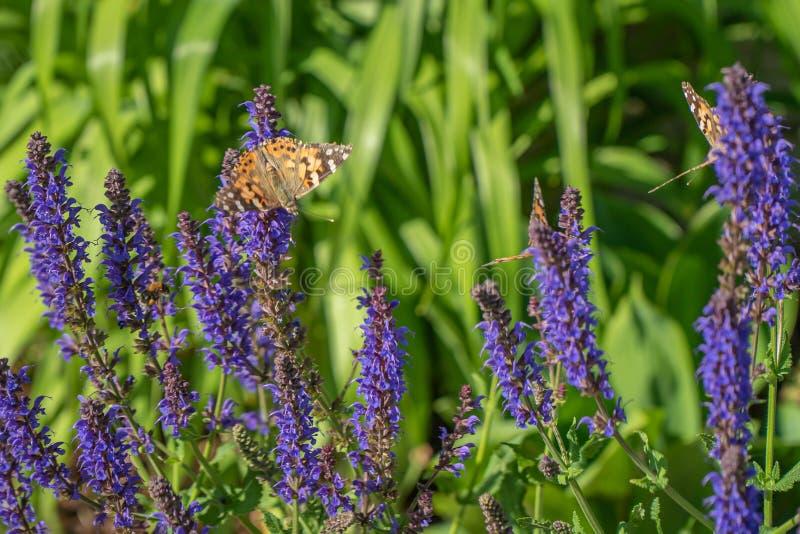 Multicolored bloemen op groene weide in bos Vliegende bijen en vlinders vult de schoonheid en de diversiteit van aard aan royalty-vrije stock afbeelding