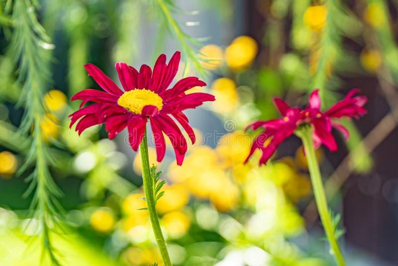Multicolored bloemen op groene weide in bos Vliegende bijen en vlinders vult de schoonheid en de diversiteit van aard aan stock fotografie