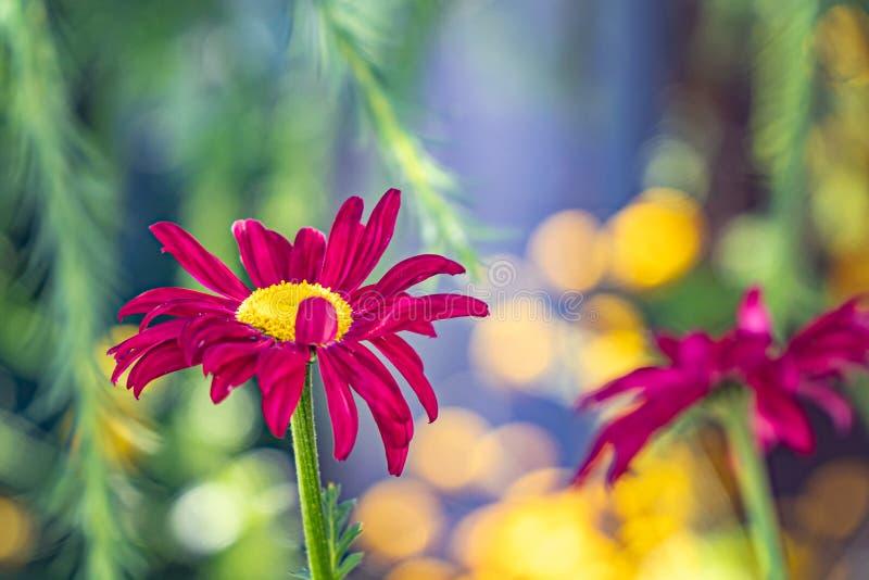 Multicolored bloemen op groene weide in bos Vliegende bijen en vlinders vult de schoonheid en de diversiteit van aard aan stock foto