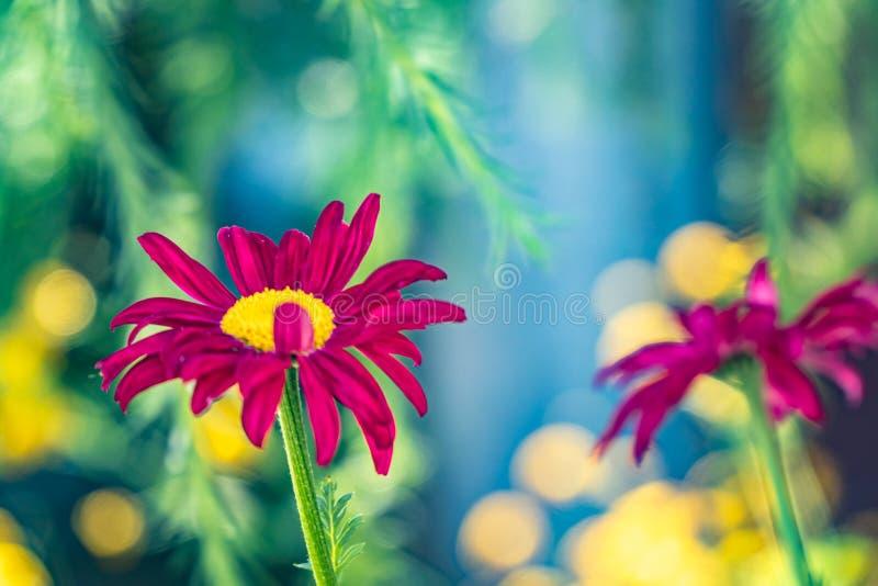 Multicolored bloemen op groene weide in bos Vliegende bijen en vlinders vult de schoonheid en de diversiteit van aard aan royalty-vrije stock afbeeldingen