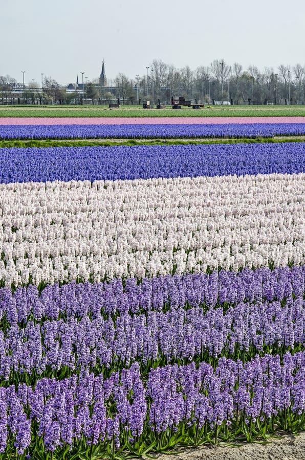 Multicolored bloemgebied royalty-vrije stock fotografie