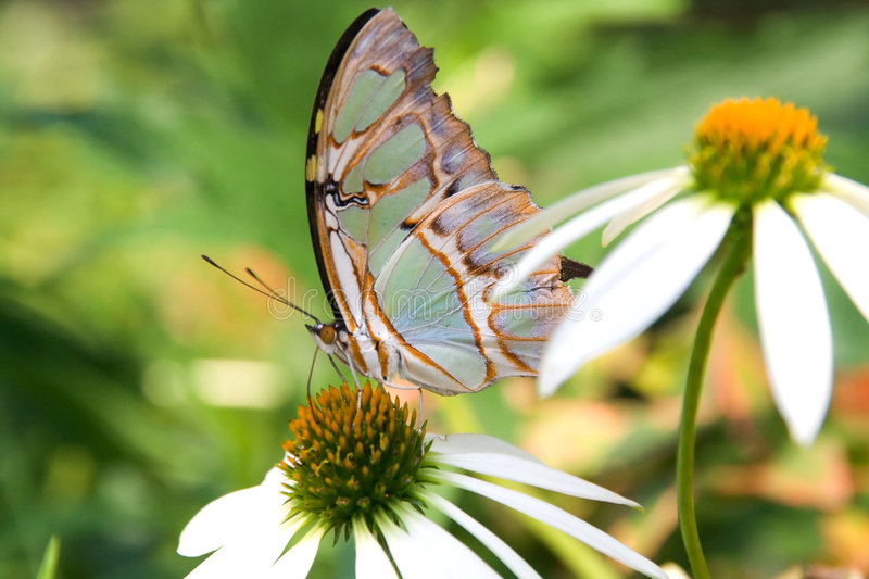 Multicolored butterfly royalty free stock images