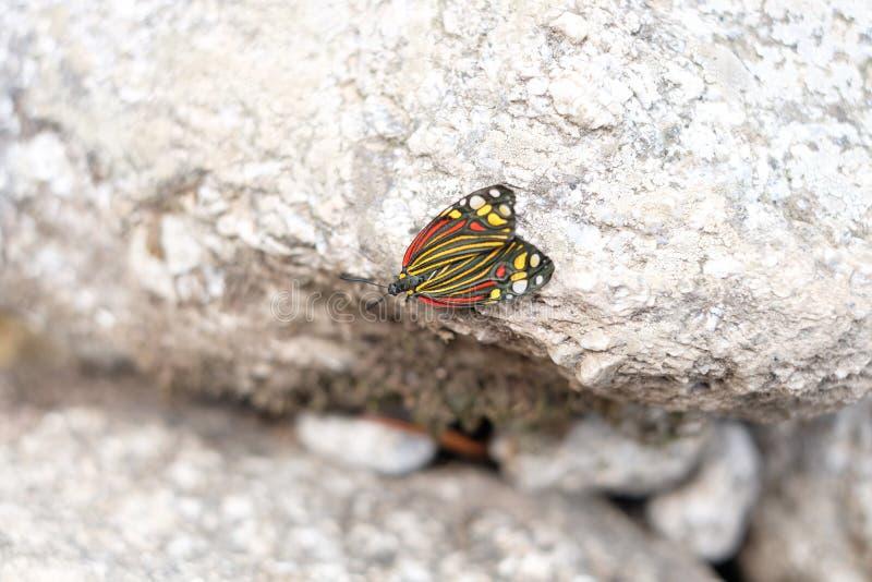 Multicolored butterly op granietsteen royalty-vrije stock afbeelding