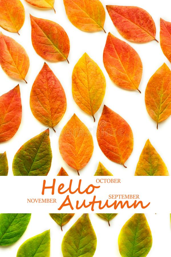 Multicolored dry autumn leaves on white background stock photography