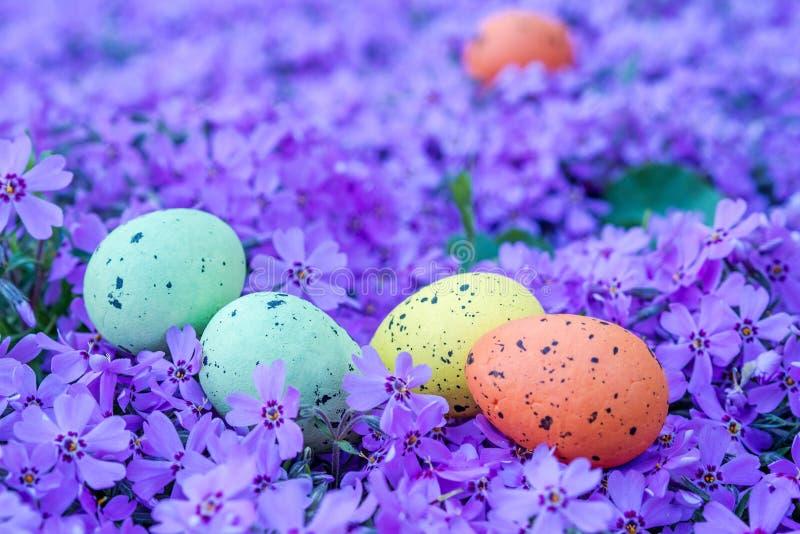 Multicolored eieren van Pasen op violette bloemen royalty-vrije stock foto