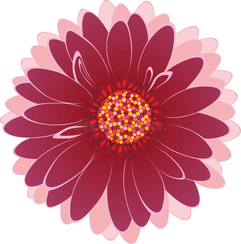 Download Multicolored flower stock photo. Image of white, gerbera - 43809394