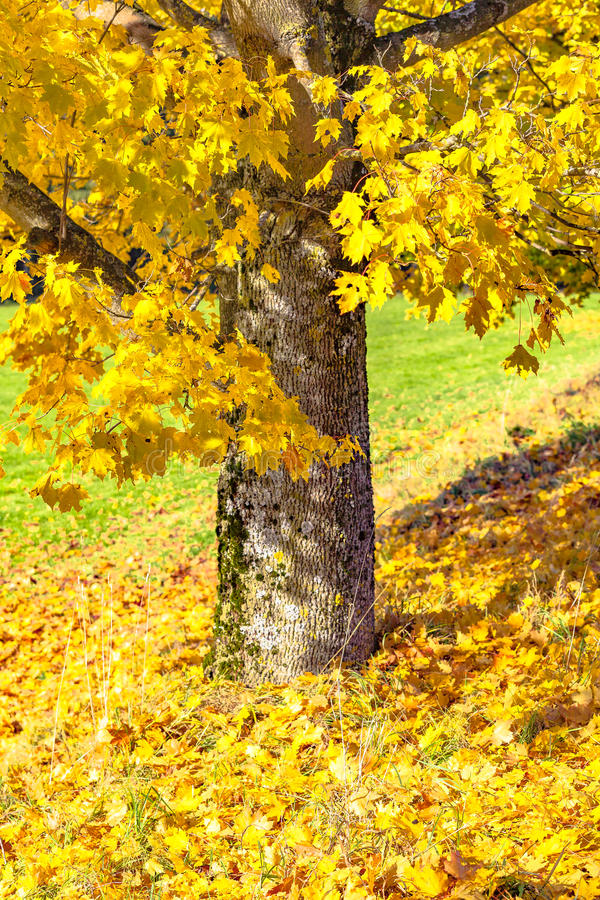 Multicolored foilage. View of a tree and multicolored foilage royalty free stock image